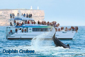 751 dolphin cruises